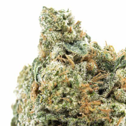 Organically grown Green Grease Cannabis