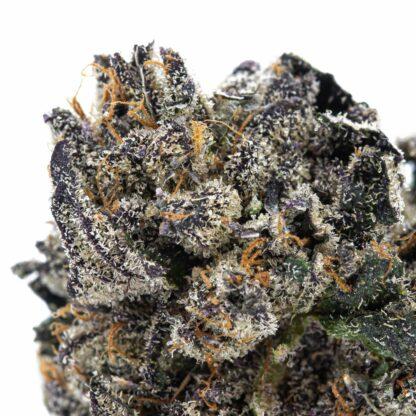 Sherbert cannabis buds From Skookum Canada